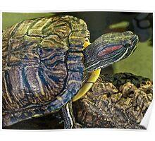 slider turtle Poster