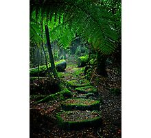 Mother Earth - Tarkine Rainforest Photographic Print