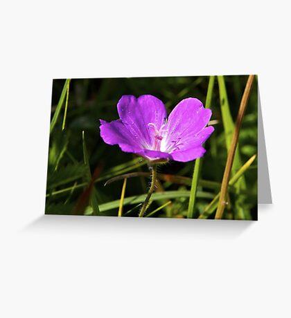 Cranesbill, Dun Eochla, Inishmore, Aran Islands Greeting Card