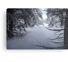 Snowy Tree Tunnel Metal Print