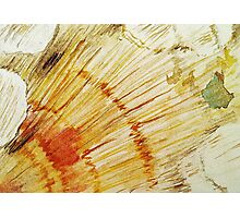 Shell Texture Photographic Print