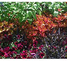 Colors of Nature Photographic Print