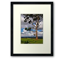 Gippsland giant, Eucalyptus,  Drouin, Victoria. Framed Print