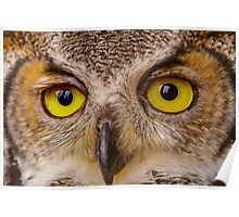 Face of Great Horned Owl Poster