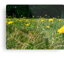 Yellow Daisies In The Grass Metal Print