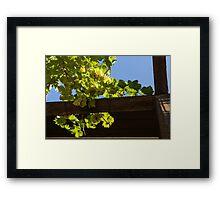 Overhead Grape Harvest - Summertime Dreaming of Fine Wines Framed Print