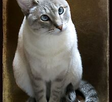 Lilac Point Siamese ~ Old Blue Eyes by SummerJade