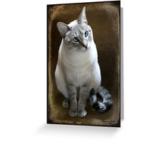 Lilac Point Siamese ~ Old Blue Eyes Greeting Card