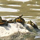 Turtle soup by MarianBendeth