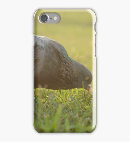 Homing Pigeon iPhone Case/Skin
