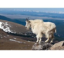 Goat on Mount Evans Photographic Print