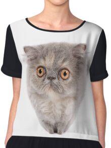 Cute Persian kitten with wide eyes Chiffon Top