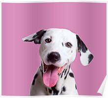 Happy, laughing Dalmatian dog Poster