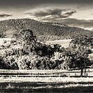 1095 Dargo Views in I.R. by DavidsArt
