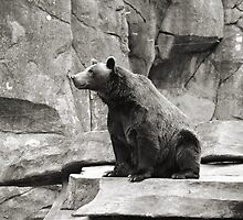 Grizzly Bear by AMPhotog