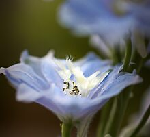 Blue Delphinium by EllieGraceOR