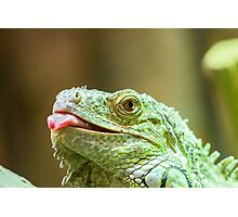 Green Iguana Reptile Portrait On Tree Branch Photographic Print
