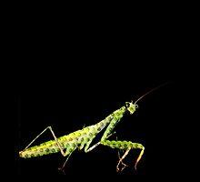 holy mantis by tinncity