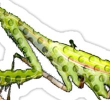 holy mantis Sticker