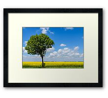 Green Tree In Yellow Rapeseed Flowers Field With Blue Sky Framed Print