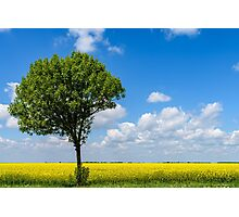 Green Tree In Yellow Rapeseed Flowers Field With Blue Sky Photographic Print