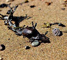 Sea Dragon by Kathleen Daley