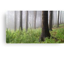 Woodland Mist Canvas Print