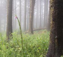 Woodland Mist Sticker
