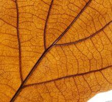 Autumn oak leaf Sticker