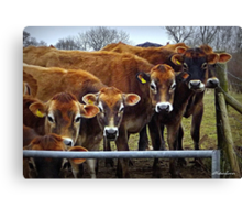 Now That I Have Your Undivided Attention.... Canvas Print