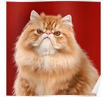 Grumpy Red Persian Cat Poster
