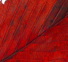 Red elm leaf Sticker