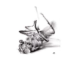 little things too, senescence II - charcoal drawing Photographic Print