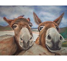 Donegal Donkey Duo Photographic Print