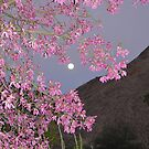Orchids in Moonlight  by Cody  VanDyke
