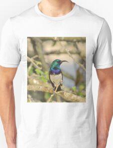White Belly Sunbird - African Wild Birds of Iridescent Beauty T-Shirt
