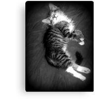 Kitten at Rest Canvas Print