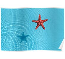 Blue water with starfish Poster