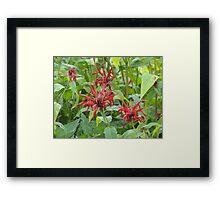 Red Flowers in the Garden Framed Print