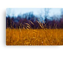 Tall Grass in Kansas Canvas Print