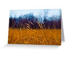 Tall Grass in Kansas Greeting Card