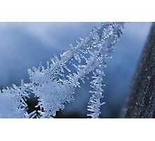 Ice Crystals on Web Photographic Print