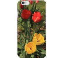 Red & Yellow Tulips iPhone Case/Skin