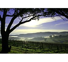 South Australia Barossa Landscape Photographic Print