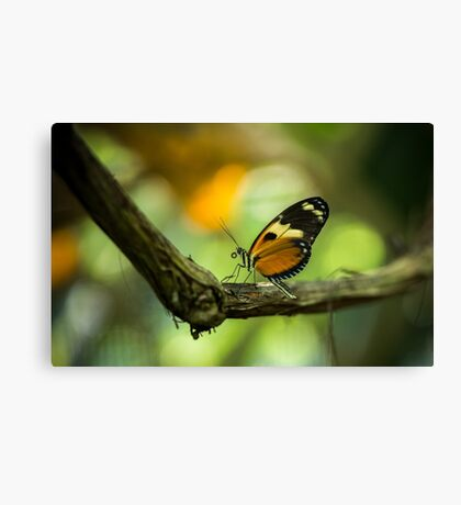 The Orange Butterfly - Wildlife Photo Canvas Print