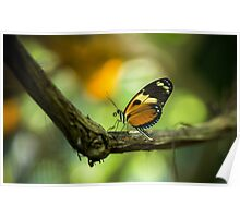 The Orange Butterfly - Wildlife Photo Poster