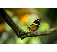 The Orange Butterfly - Wildlife Photo Photographic Print