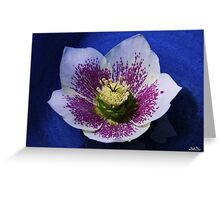 Hellebore Flower Head Greeting Card