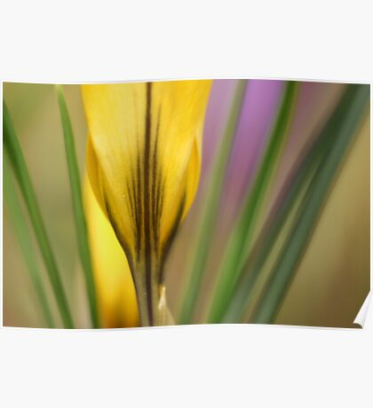 First flowers of the year in macro Poster