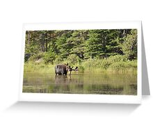 Muskoka Moose Greeting Card